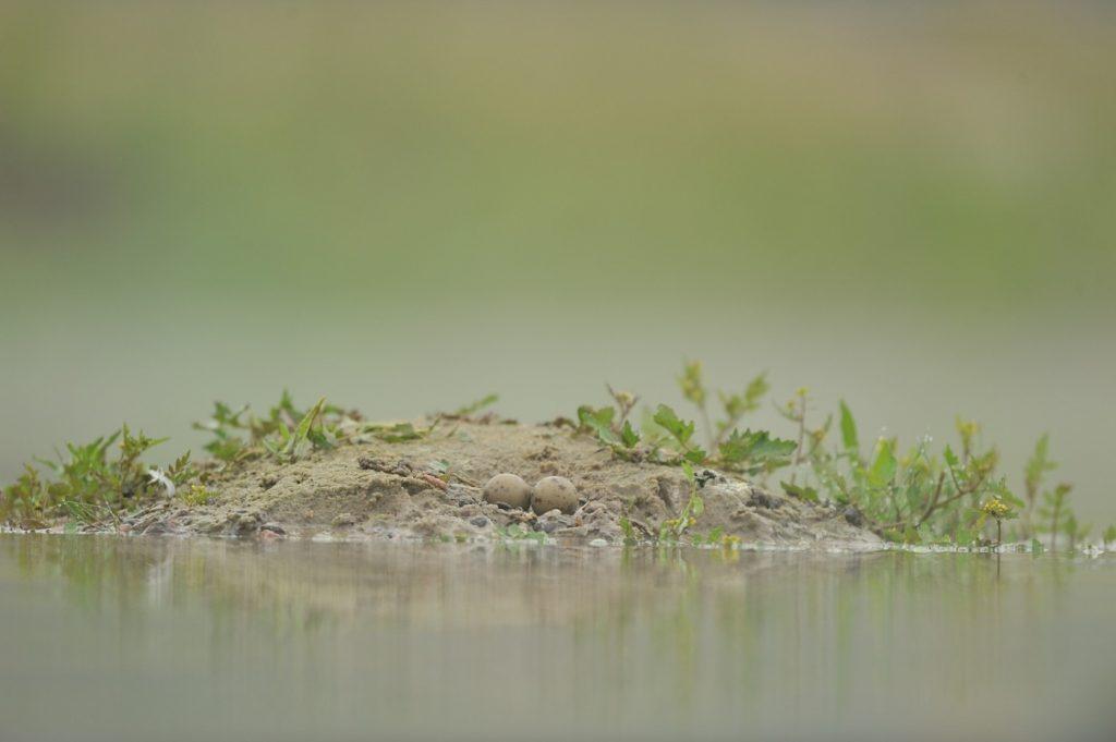 23.-i-jej-gniazdo-kilkanascie-dni-pozniej-zniszczone-przez-wode