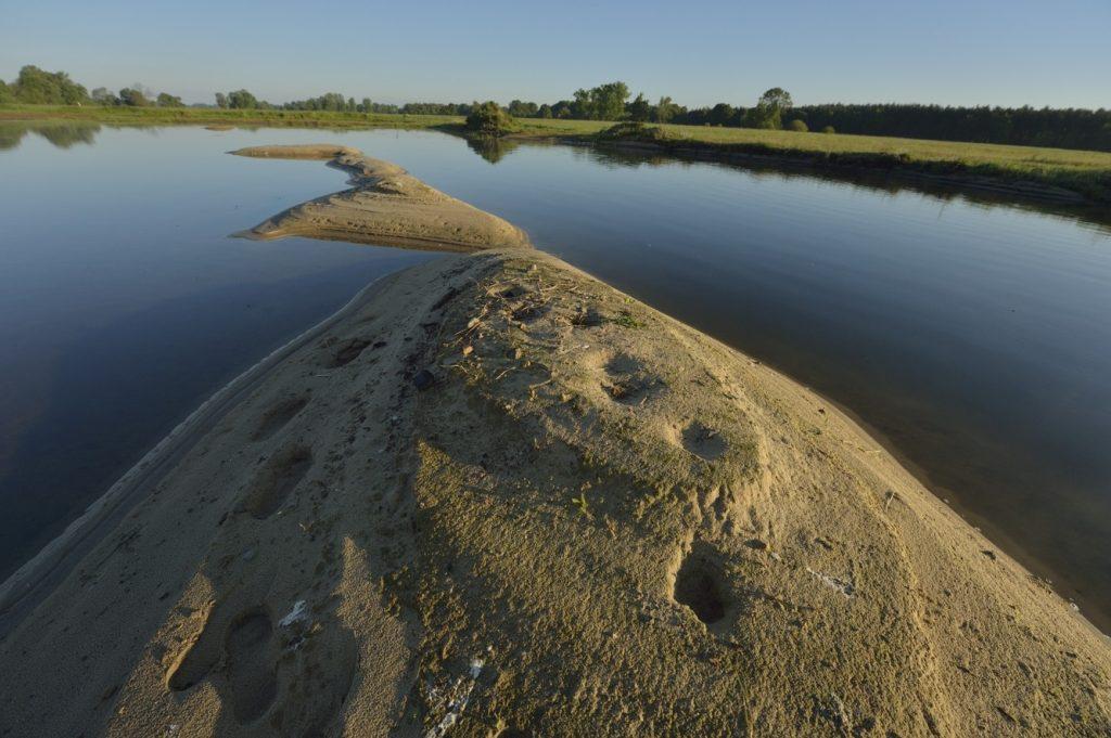 24.-dolki-gniazdowe-rybitw-i-sieweczek-spladrowane-przez-ssaki-w-wyniku-obnizenia-lustra-wody